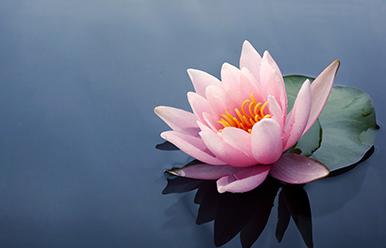 Conferencia: La flor IKIGAI del propósito