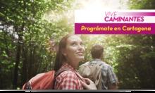 50163 Vive Caminantes