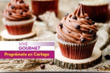 50236 Vive Gourmet