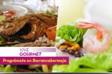 50228 Vive Gourmet