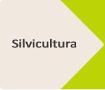 Induguadua_silvicutura