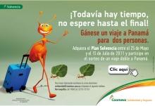 p_hormigas_Caribe