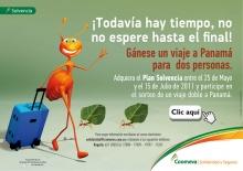 p_hormigas_Bogota
