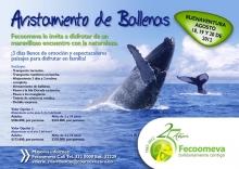 p_Feco_Ballenas