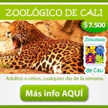 img_CaliZoo